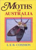Moths of Australia